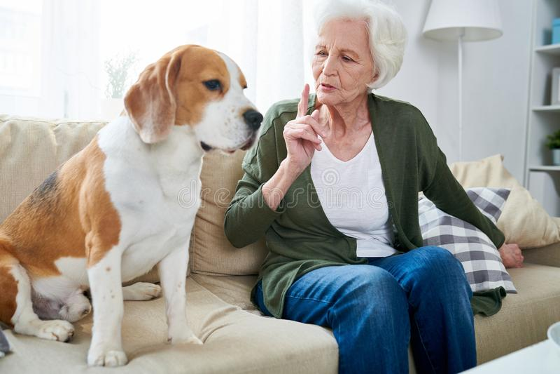 Senior Woman with Pet stock photo