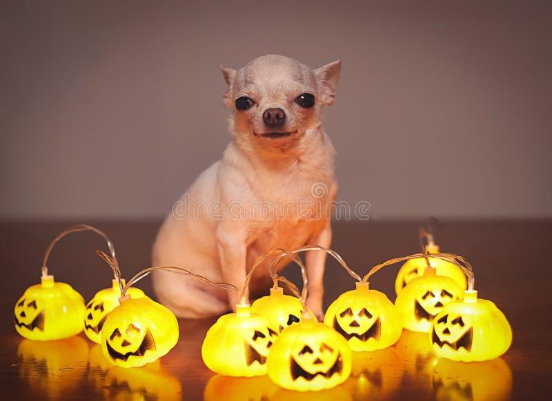 39+ Halloween Dog Wallpaper Images