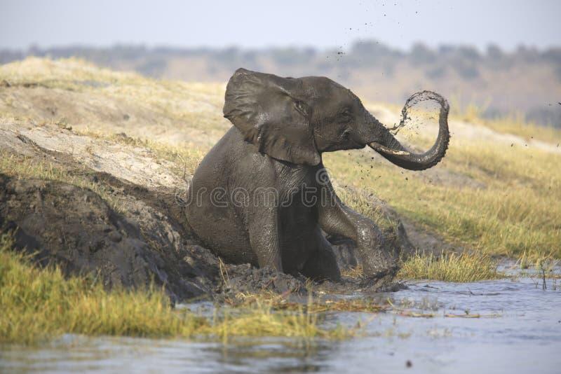 Portrait of wild free elephant showering. Portrait of wild free bull elephant showering in river stock image