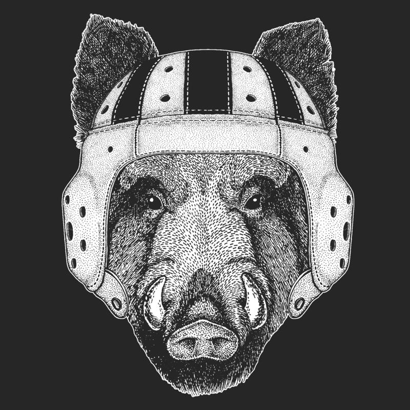 Pig Rugby Stock Illustrations 47 Pig Rugby Stock