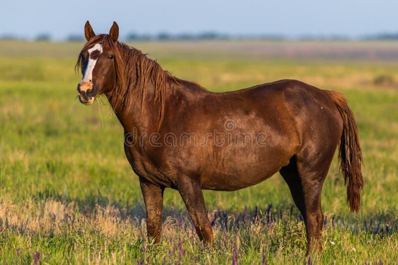 Portrait of wild horse in wildlife stock images