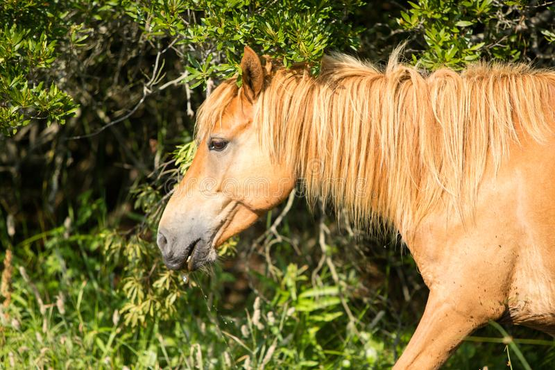Portrait profile of wild horse in park royalty free stock images