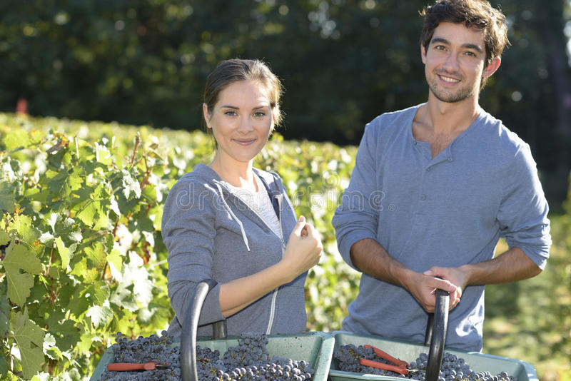 Portrait of wine-growers with grapes. Young couple of wine-growers walking in vine rows stock photo