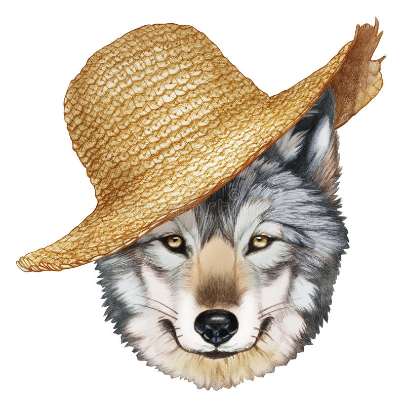 Portrait of Wolf with straw hat. Hand-drawn illustration, digitally colored royalty free illustration
