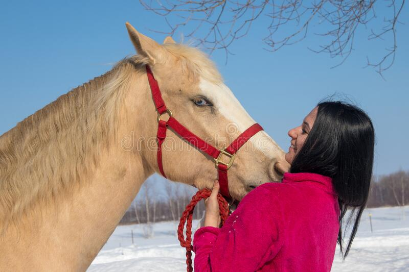 Portrait of a woman and her palomino male horse stock image
