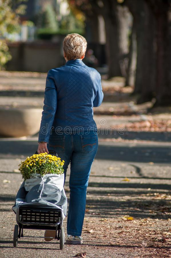 Portrait of woman walking with yellow chrysanthemums flowers on trolley at cemetery royalty free stock photo
