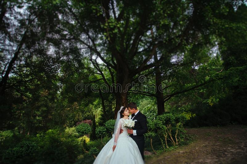 Portrait of a wonderful wedding couple stock photo