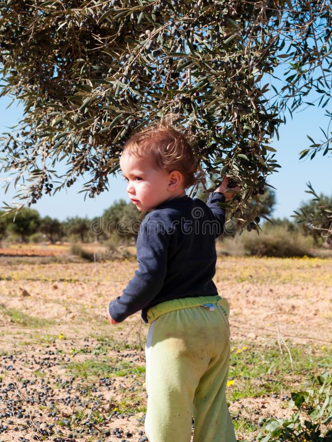 Portrait of 2 year old girl near an olive tree royalty free stock image