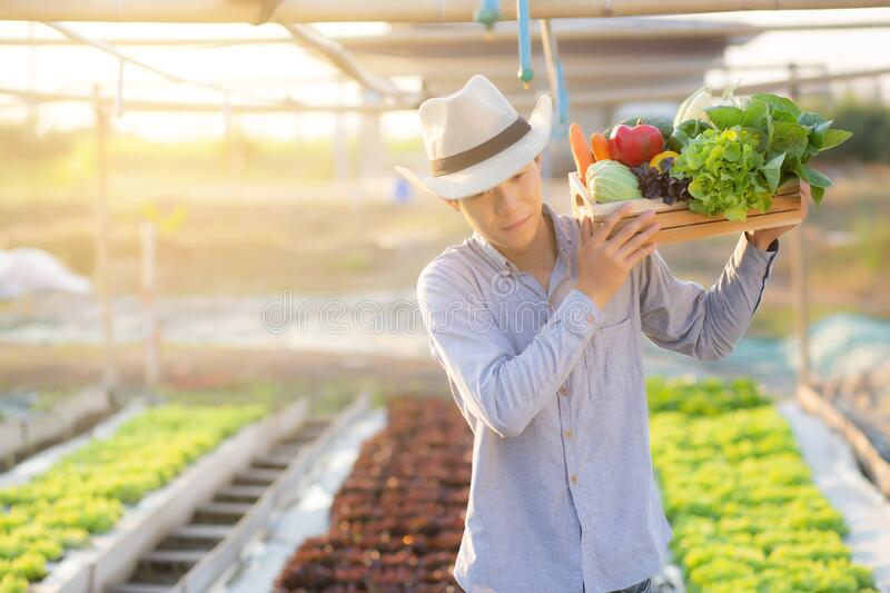 Portrait young asian man walking harvest and picking up fresh organic vegetable garden in basket in the hydroponic farm royalty free stock photo