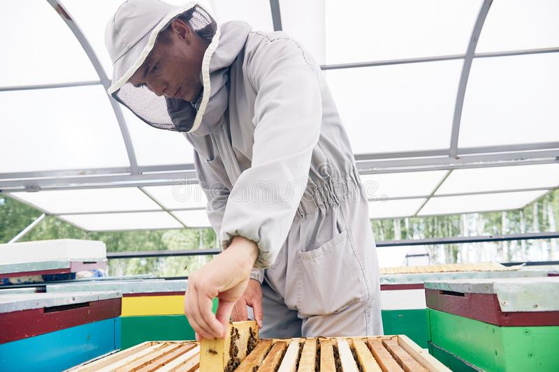 Young Beekeeper Working in Apiary stock images