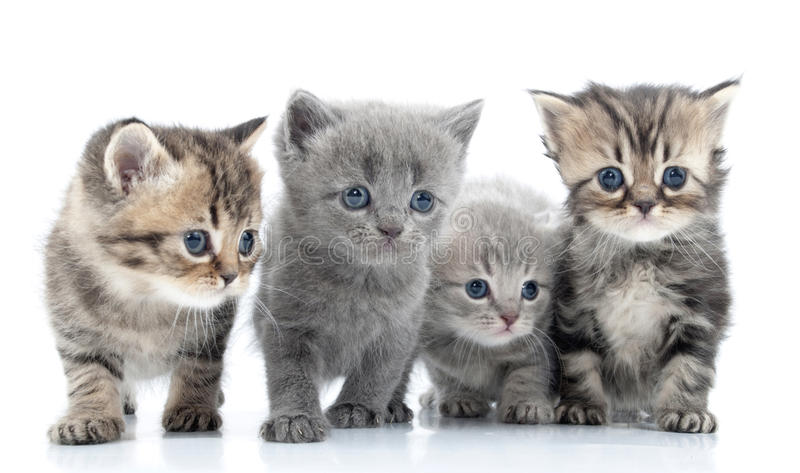 Portrait of young cats' group . Studio shot. . stock image