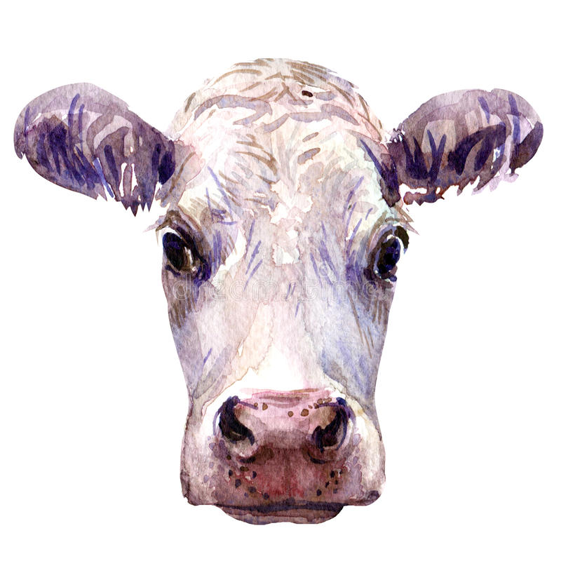 Portrait of young cow head isolated, watercolor illustration on white stock illustration
