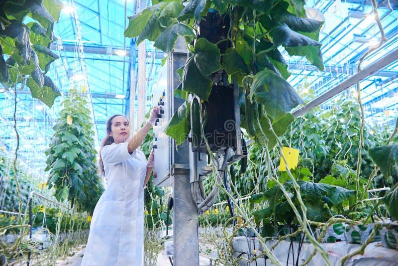 Female Scientist Examining Vegetables stock photos