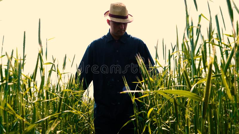 Portrait of a young guy man in a working uniform and a straw hat in the middle of a field around wheat and hay, running around i. T and checking the wheat for royalty free stock photos