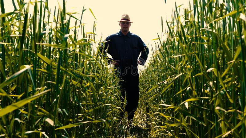 Portrait of a young guy man in a working uniform and a straw hat in the middle of a field around wheat and hay, running around i. T and checking the wheat for royalty free stock photo