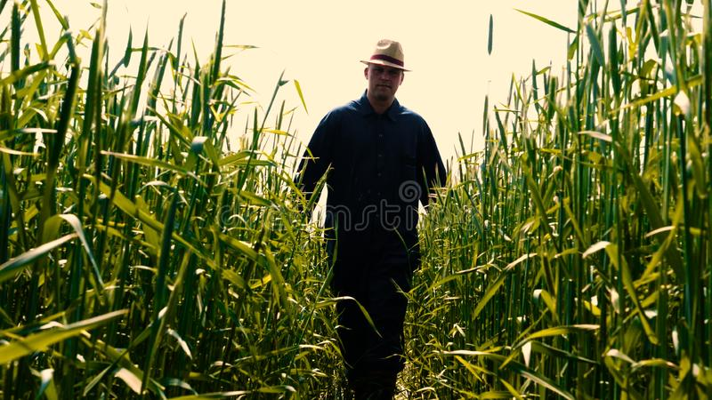 Portrait of a young guy man in a working uniform and a straw hat in the middle of a field around wheat and hay, running around i. T and checking the wheat for stock photo