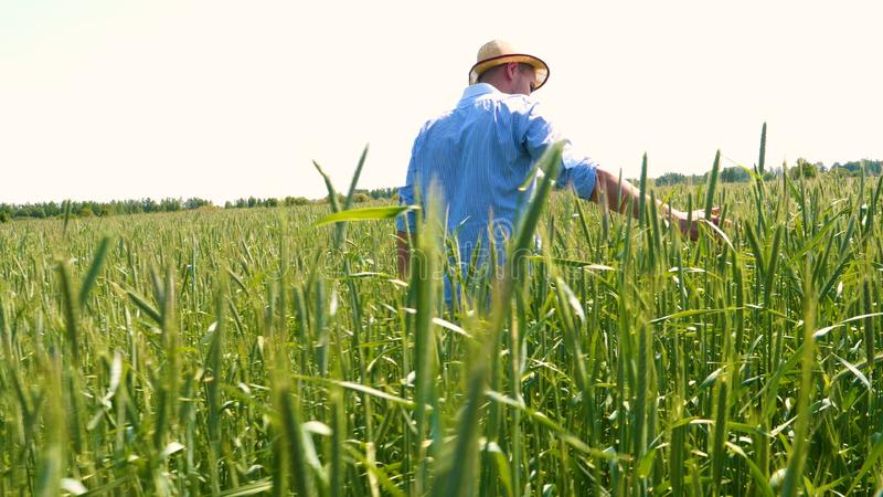 Portrait of a young guy man in a working uniform and a straw hat in the middle of a field around wheat and hay, running around i. T and checking the wheat for stock images