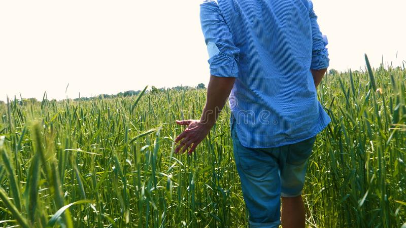 Portrait of a young guy man in a working uniform and a straw hat in the middle of a field around wheat and hay, running around i. T and checking the wheat for stock image