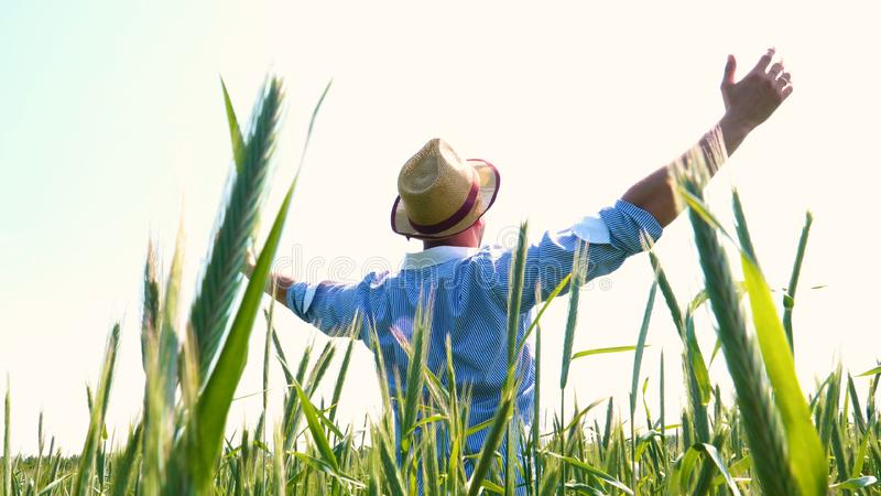 Portrait of a young guy man in a working uniform and a straw hat in the middle of a field around wheat and hay, running around i. T and checking the wheat for stock photography