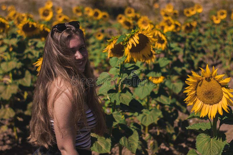 Portrait of a young smiling girl in a field of sunflowers royalty free stock images