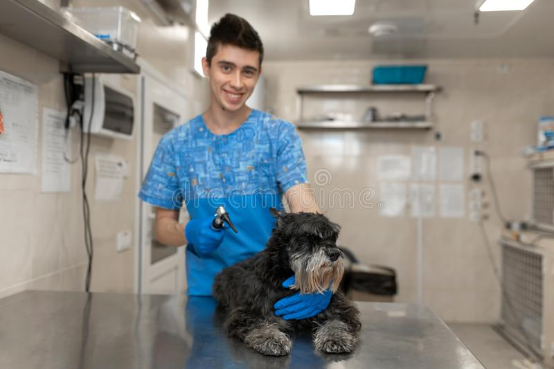 Portrait of young veterinarian technician in medical uniform with happy dog after ears check royalty free stock photos