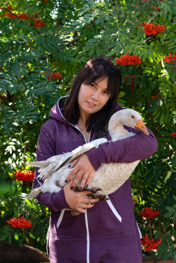Portrait of a young woman with a feathered friend white goose against rowan with orange berries. Waist up portrait of a young woman with a feathered friend white royalty free stock images