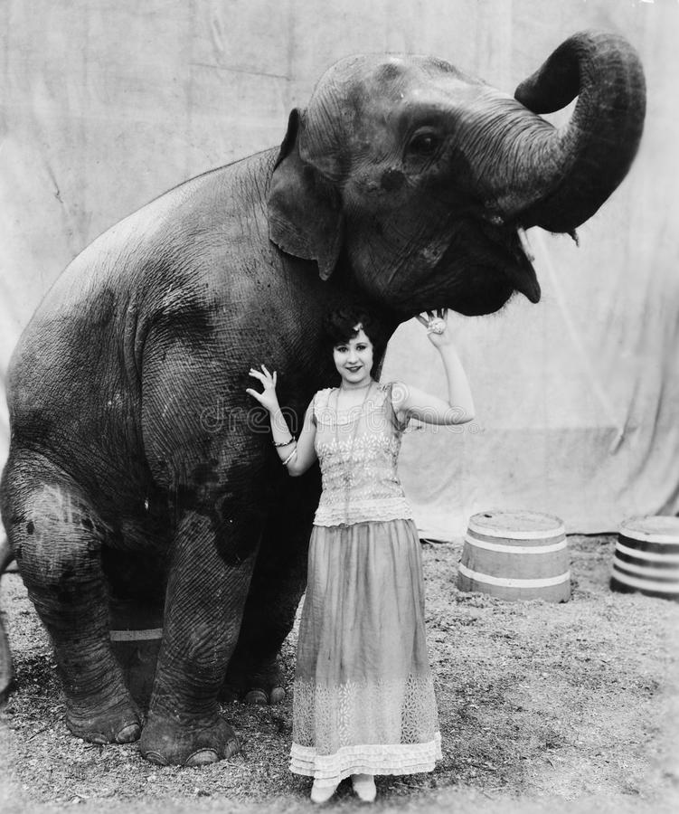 Portrait of a young woman standing under an elephant royalty free stock image