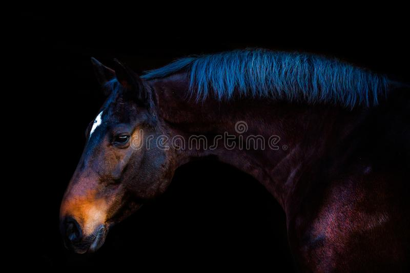 Portraits des chevaux photo stock