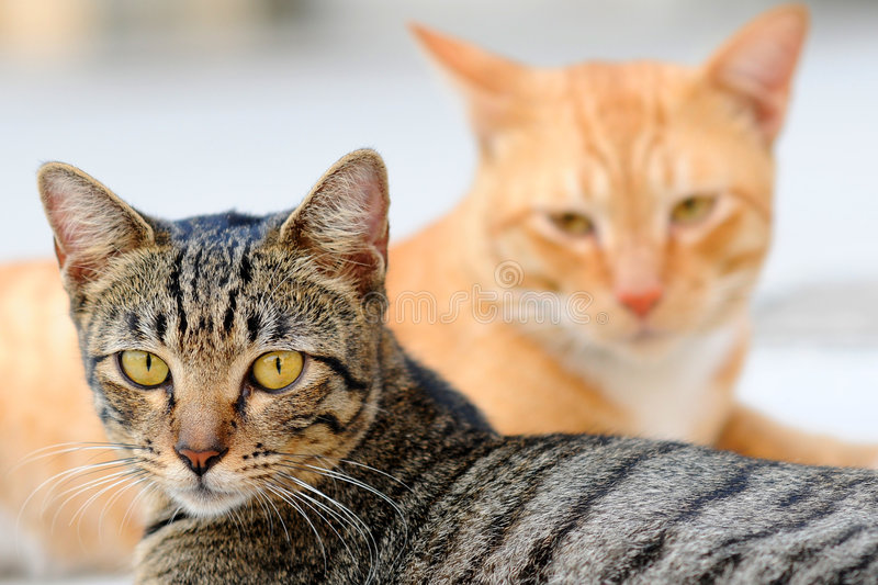 Portraits of two cats stock photo