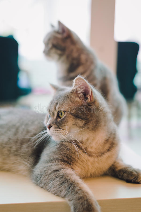 A portraiture of a cat in the cafe with soft light and soft focus. Relax and comfort. Cat stock photo