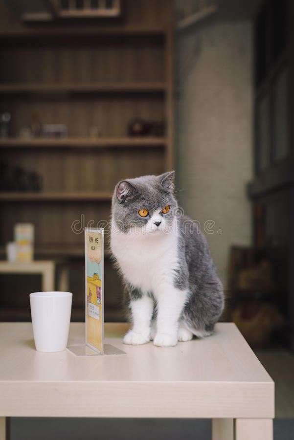 A portraiture of a cat in the room filled with soft light and use soft focus. The focus is on the eyes while WB in shift intendedl. Y. relax and comfort. cat stock image