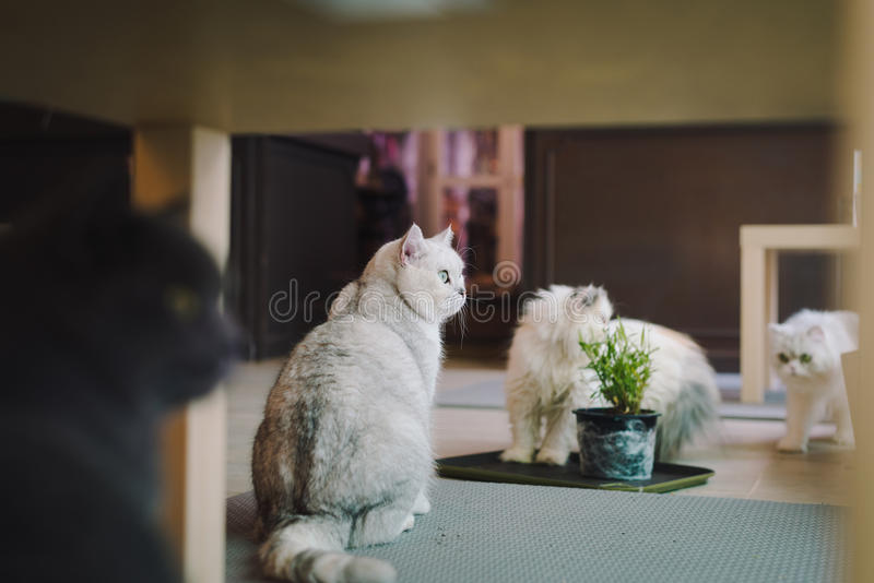A portraiture of a cat in the room filled with soft light and use a soft focus. Main focus is on the eyes while WB is shifted inte. Ndedly. Relax and comfort.cat stock images