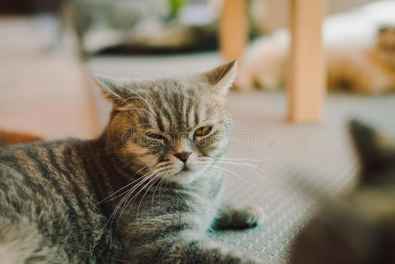 A portraiture of a cat in the room filled with soft light and use a soft focus. Relax and comfort. Cat royalty free stock image