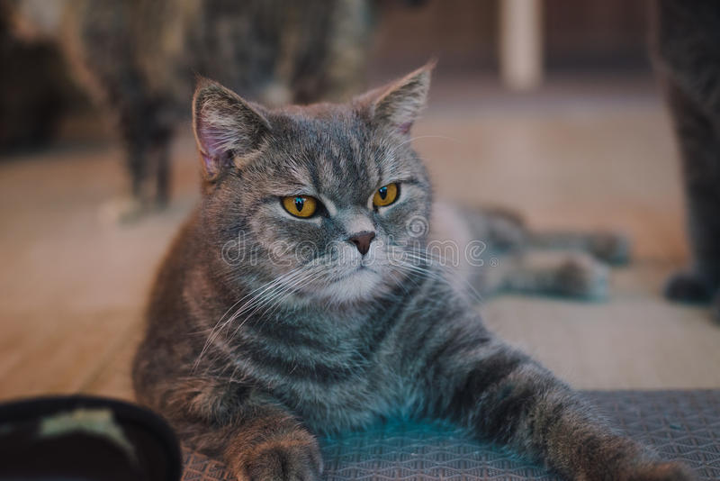 A portraiture of a cat in the room with soft light and soft focus. The main focus is on the eyes while the white balance is intend. Ed shift. Relax, safe and stock photos