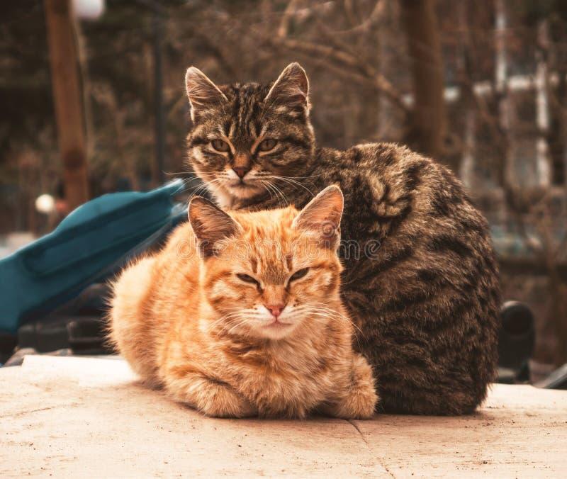 Portrat av de två katterna arkivfoto