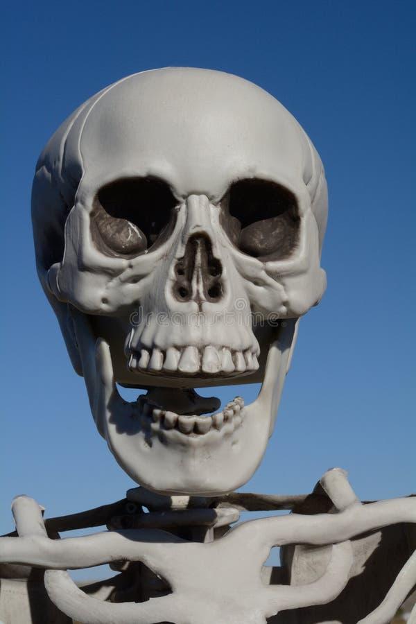 Portrat van skelet stock foto's