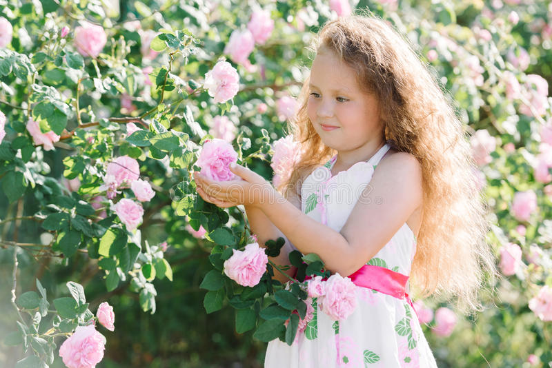 Portret śliczna berbeć dziewczyna plenerowa w ogródzie różanym wącha kwiaty zdjęcia royalty free