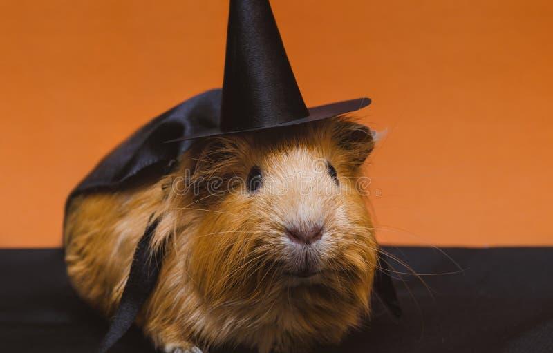 Portret śliczny czerwony królik doświadczalny w Halloween kostiumu fotografia royalty free