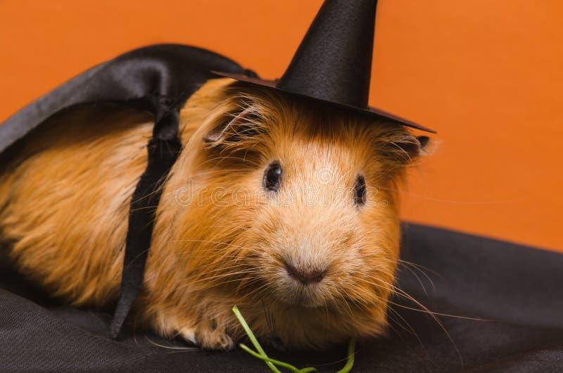 Portret śliczny czerwony królik doświadczalny w Halloween kostiumu zdjęcie royalty free