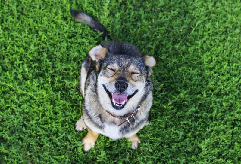 Portret śliczny piękny brązu pies patrzeje upwards w dziąsłach zdjęcia stock
