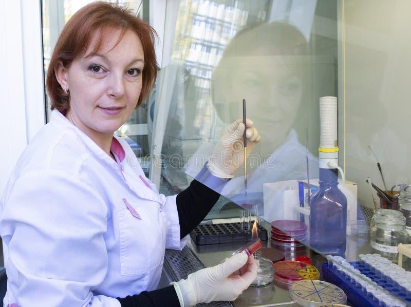 Portret żeński badacz robi badaniu w lab zdjęcia royalty free