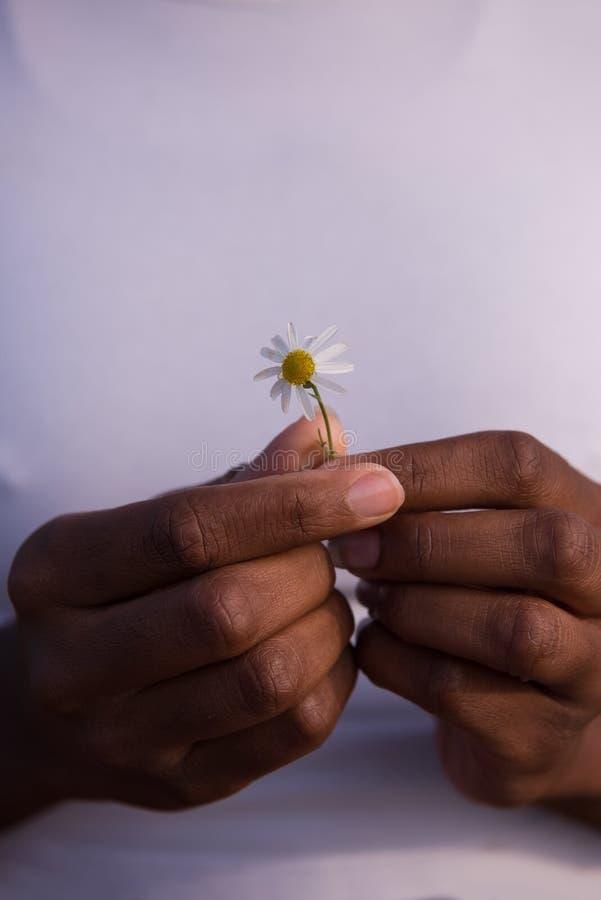 Portret amerykanin afrykańskiego pochodzenia dziewczyna z kwiatem w jej ręce obraz stock