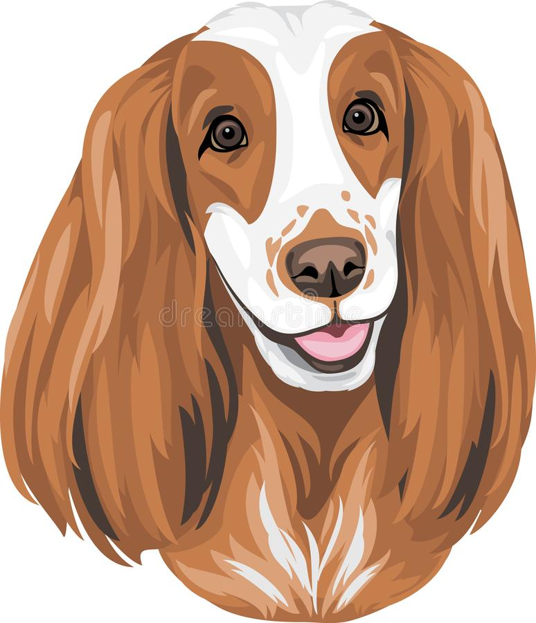 Portret anglicy Cocker spaniel royalty ilustracja