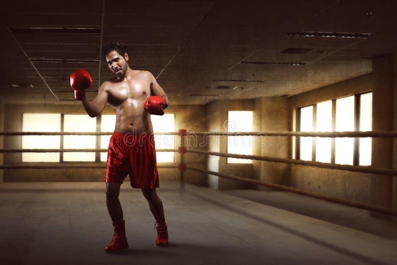 Portret azjatykci boksera spełniania uppercut na bokserskim pierścionku obraz stock