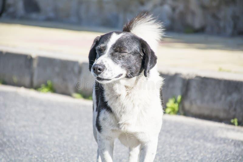 Portret bezdomny pies na drodze fotografia stock