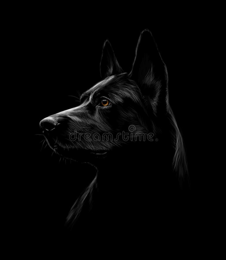 Portret czarny pasterski pies na czarnym tle royalty ilustracja
