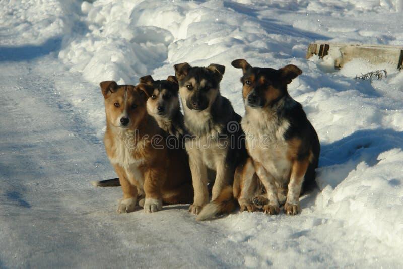 Portret Cztery szczeniaka na drodze obrazy royalty free