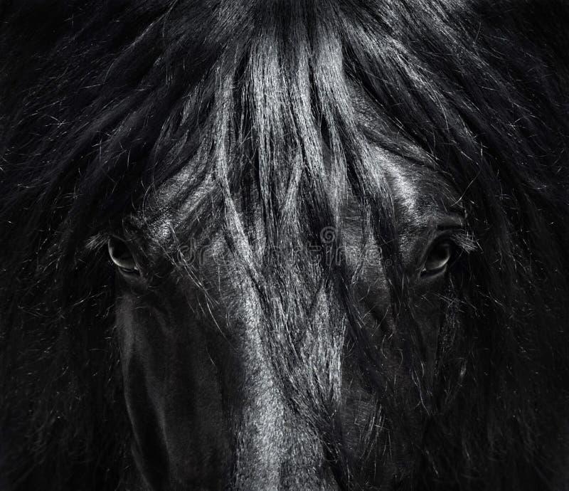Portret dicht omhoog Spaans rasecht paard met lange manen stock fotografie