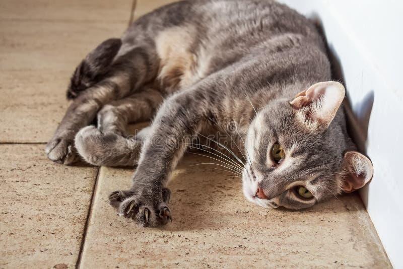 Portret die van binnenlandse kat op vloer liggen stock foto's