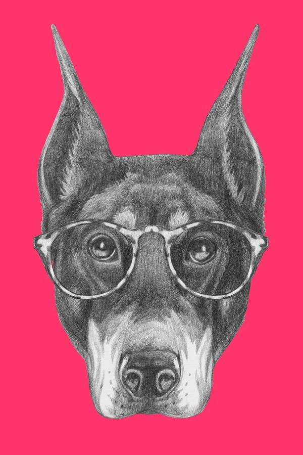 Portret Doberman Pinscher z szkłami ilustracji